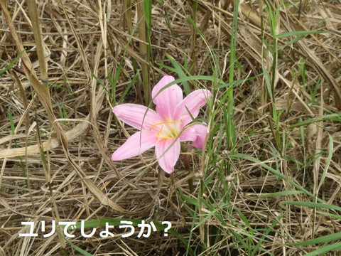 Img_6009