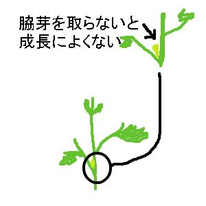 Cocolog_oekaki_2013_05_17_14_36